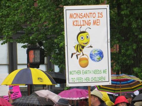 Monsanto BEE photos